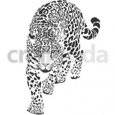 ANIMAL28